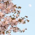 北海道の5-6月は花々が一斉に咲く。のんびり旅行に向く季節。