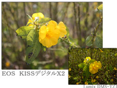EOS KISSデジタルX2とLumix DMS-Tz1の写真比較