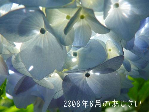 目で涼を取って体は温かく-紫陽花の写真の一枚目の画像