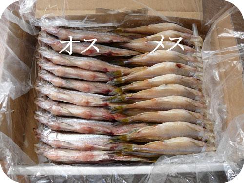 北海道・阿部水産のししゃも(柳葉魚)