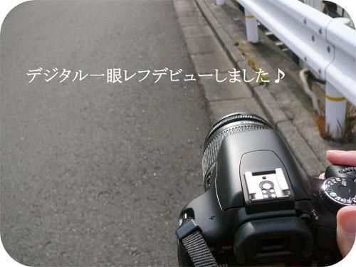 EOS KISSデジタルX2でデジイチデビュー☆の一枚目の画像