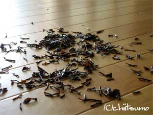 茶殻 床掃除 エコロジー ナチュラルクリーニング