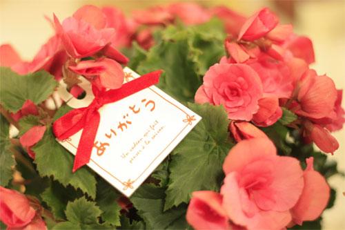 イイハナ・ドットコムで配達日指定できる母の日の贈り物はどれ?の一枚目の画像