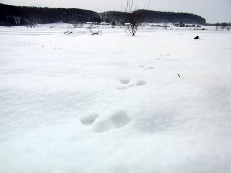 謹賀新年:2011年の目標の参考画像