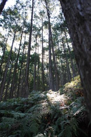 熊野古道ウォーク(発心門王子から熊野本宮大社まで)