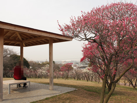 荒山公園(こうぜんこうえん)の梅園