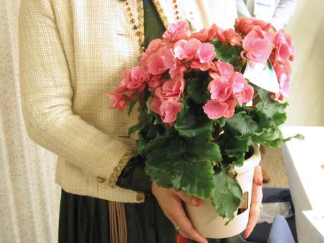 今年も母の日はe87(イイハナ)の鉢植えにしましたの一枚目の画像