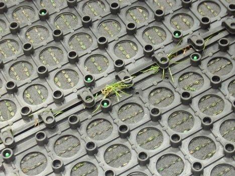 「人工芝マット」というベルメゾンのオリジナル芝生マットは枯草混じりでリアルすぎの一枚目の画像