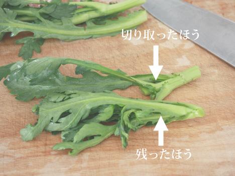 鍋用の切り方をした春菊