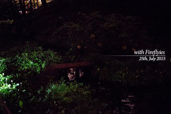 第18回「ホタル祭りin西神楽」で2015年7月25日に撮影したほたる