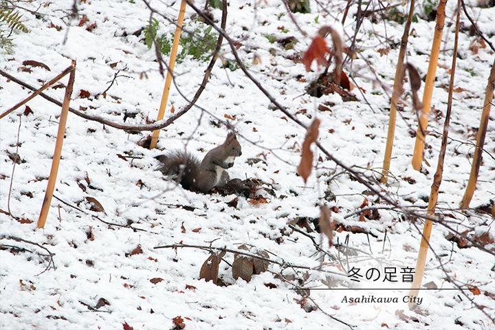 雪の神楽岡公園とエゾリス