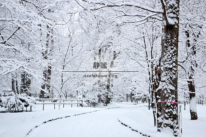 「静謐」雪で覆われた静かな公園の写真