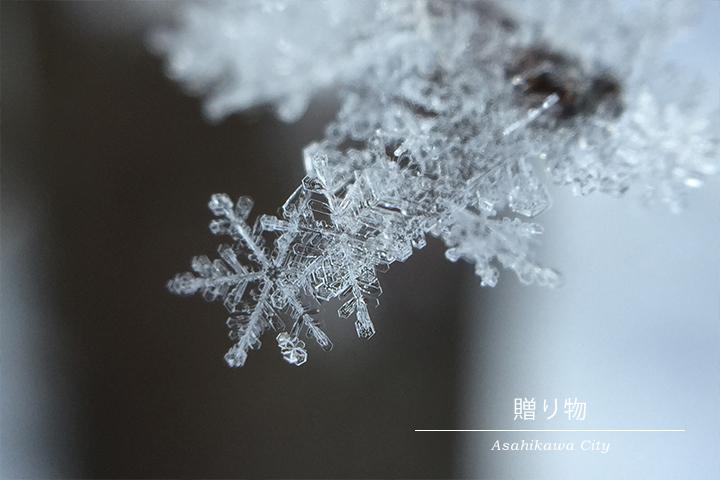 【厳冬の贈り物】雪の結晶 in 北海道(旭川市)の一枚目の画像