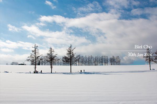 冬の美瑛 晴れのマイルドセブンの丘